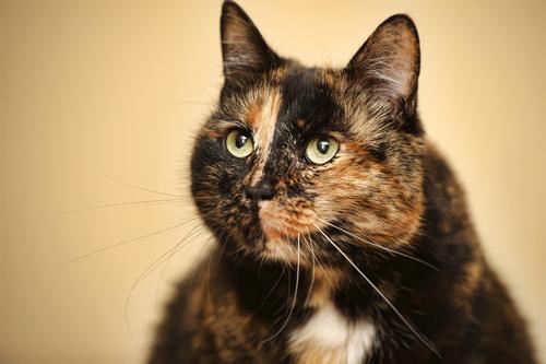 Henry - cat mystery